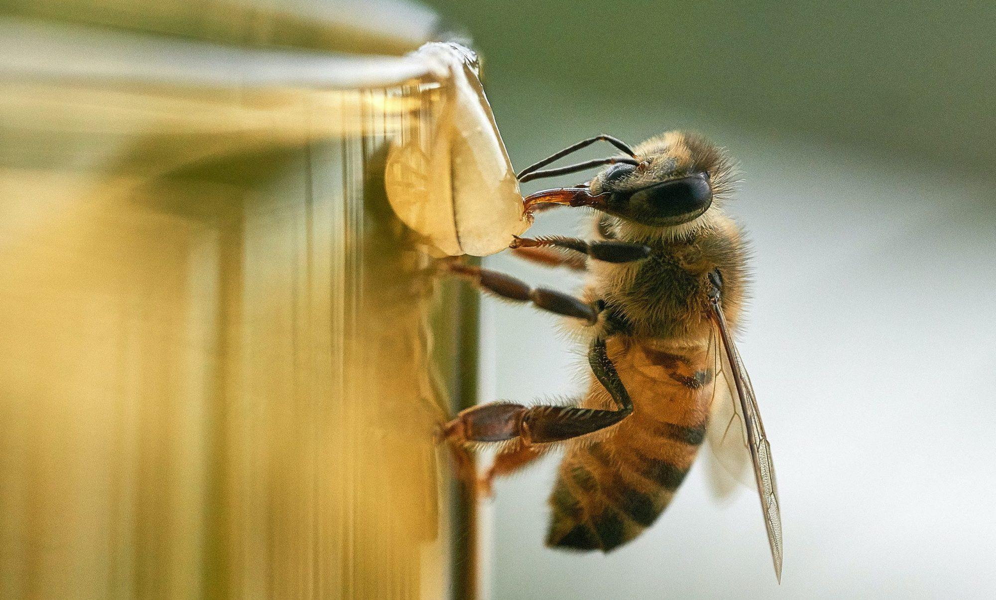 Hardy's Bienenwelt